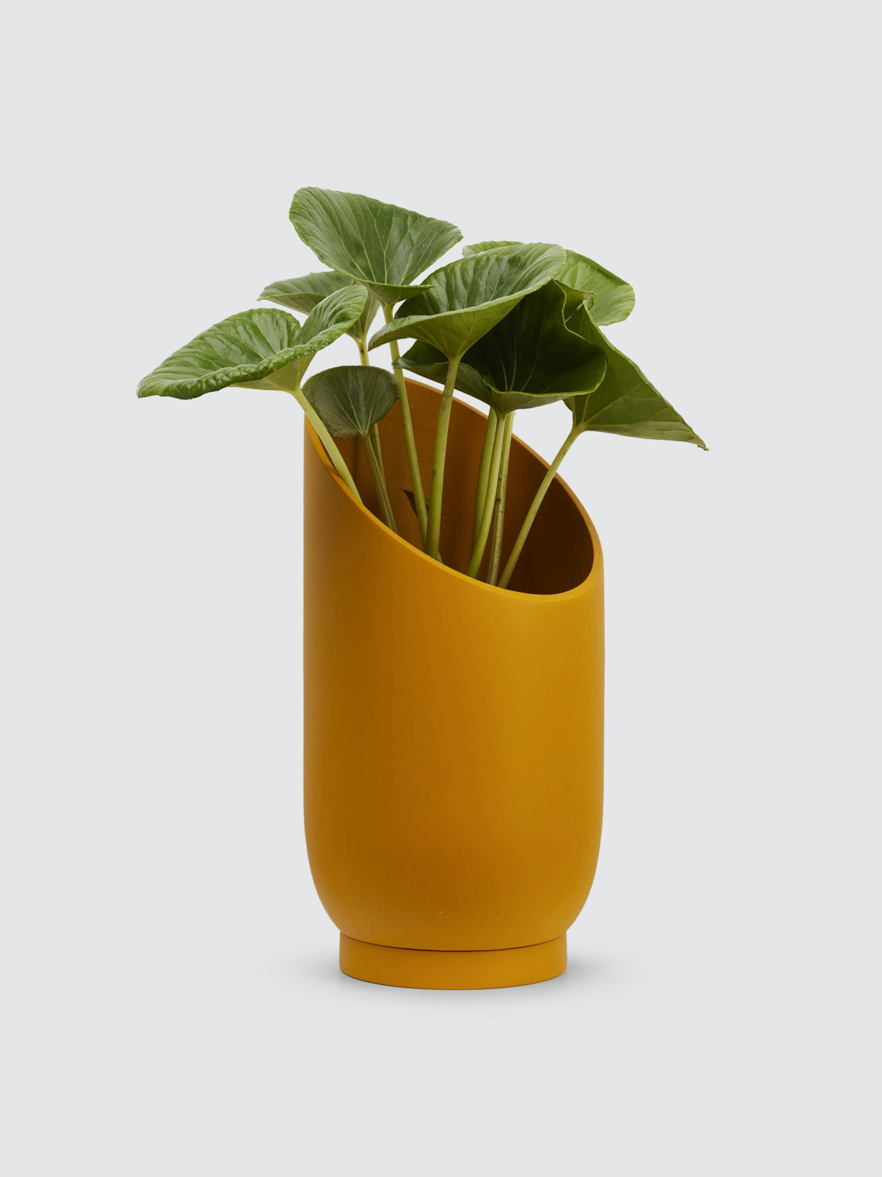 Capra Designs Large Summit Planter In Gold
